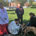Blessing of the animals is our partnership with creation